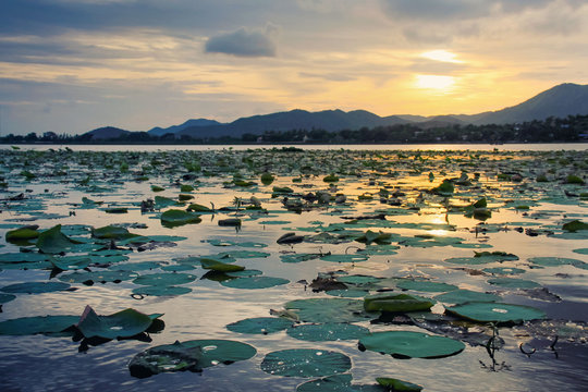 Lily Pads On Lake Against Sky During Sunset