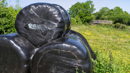 Black plastic wrapping for farm hay, textured black synthetic covering animal feed. Farmland