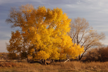 Fond de hotte en verre imprimé Piscine Scenic View Of Field Against Sky During Autumn