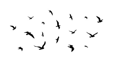 Flying flock of birds. Flight bird silhouettes, isolated black doves or seagulls collection. Freedom metaphor vector illustration. Flock bird black silhouette illustration
