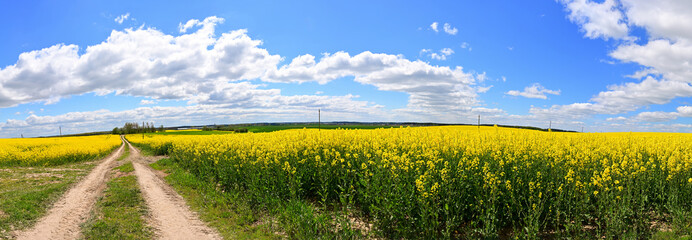 Spherical virtual reality concept VR AR. Full seamless panorama of 360 degrees clouds moving over a rape field on a sunny bright day.
