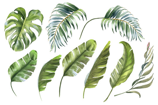 Tropical Leaves Collection Watercolor Palm Leaf Monstera Banana Leaf Buy This Stock Illustration And Explore Similar Illustrations At Adobe Stock Adobe Stock Polish your personal project or design with these tropical transparent png images, make it even more personalized and more. adobe stock
