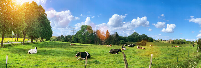 Green field with cows trees and blue sky. Panoramic view to grass, trees and flowers on the hill on sunny spring day