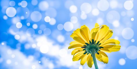 Rudbeckia flower on blue sky background