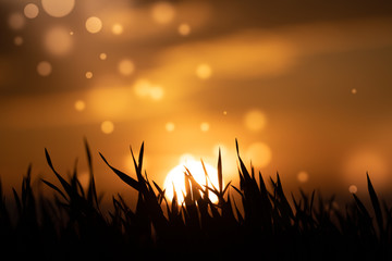 Abstract floral blurred  background. Plants at sunset on bokeh background