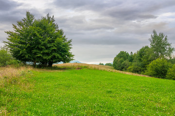 Wall Mural - tree on the grassy meadow in countryside landscape. stormy overcast weather in mountain. beautiful nature of rural scenery in summer