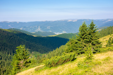Wall Mural - forest on the hillside. view in to the valley. green nature scenery concept. beautiful mountain landscape in summer. blue sky with some clouds in the morning above the distant ridge