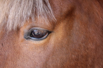 Canvas Prints Horses Eye of a brown horse close up.