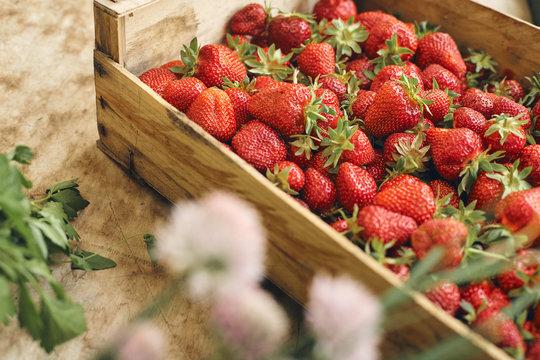 fresh strawberrys of organic farming