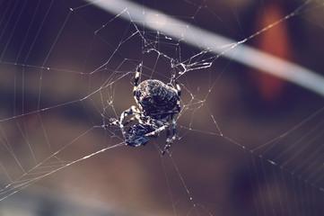 Obraz Macro Shot Of Spider On Web - fototapety do salonu