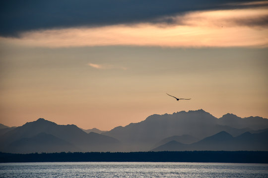 sunset over the sea with mountains in seattle washington