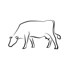 Cow icon. Outline vector illustration. Hand drawn style.