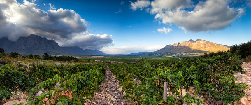 Panoramic View of the Slanghoek Valley near the town of Worcester in the Breede Valley in the Western Cape of South Africa