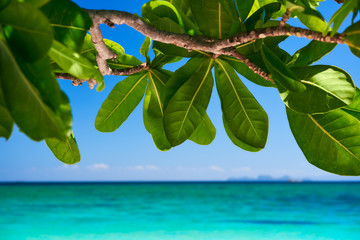 Tropical island nature background