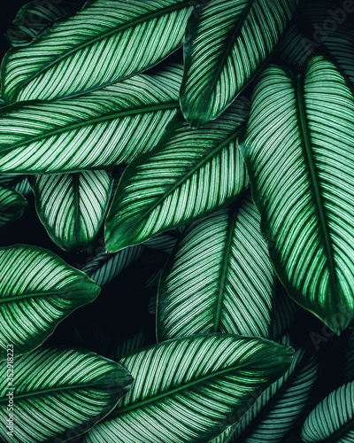 Wall mural closeup nature view of green leaf background, dark wallpaper concept, tropical leaf