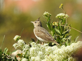 photo of a living wild bird in nature sitting on grass. Fotomurales