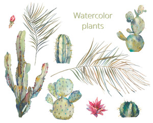 Isolated exotic greenery and cactus. Watercolor palm tree branches, agave on white background