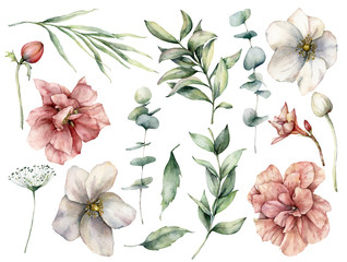 Watercolor floral set with white and pink flowers and eucalyptus leaves. Hand painted roses, buds, berries isolated on white background. Botanical illustration for design, print, fabric, background.