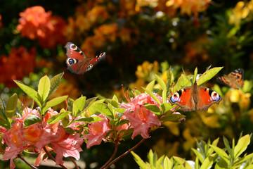 Schmetterling 677