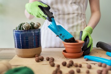 Womans hands in gloves planting young cactus plant in pot