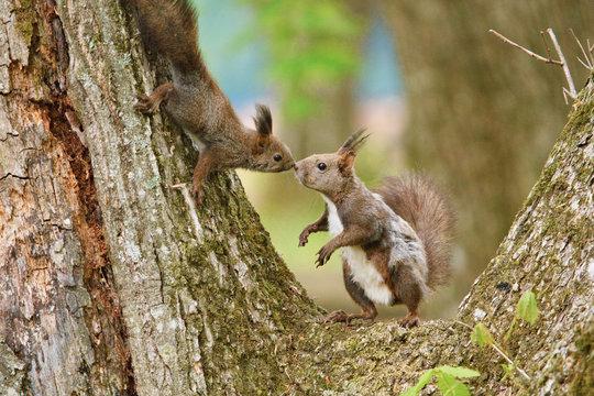 母リスと子リス