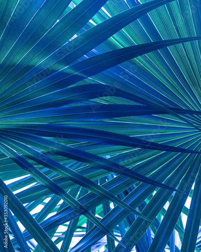 Wall mural closeup nature view of tropical leaf background, dark green wallpaper concept.