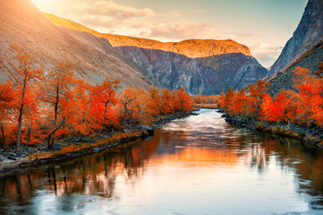 Autumn landscape of Chulyshman river gorge in Altai mountains, Siberia, Russia. Red autumn trees...