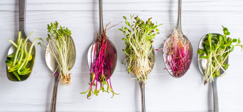 Organic microgreens in spoon, healthy eating concept, diet and slimming, vegan lifestyle