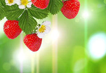 Wall Mural - Fruits frame background space for text,frame of strawberries, berries and flowers