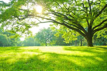 Fotobehang Pistache Park tree