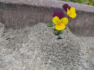 Obraz kwiatki w piasku - fototapety do salonu