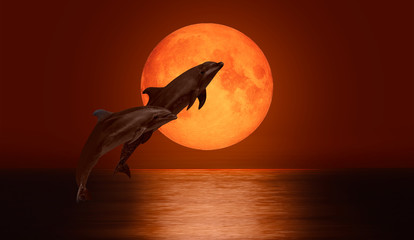 Wall Mural - Dolphin jumping on the water - Night sky with moon in the clouds on the foreground calm sea