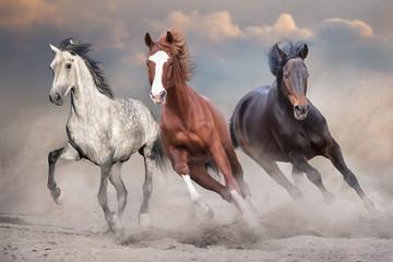 Wall Mural - Horses free run on desert storm against sunset sky