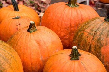 Close up of pumpkins on sale in a farmers market. Selective focus. Halloween background.