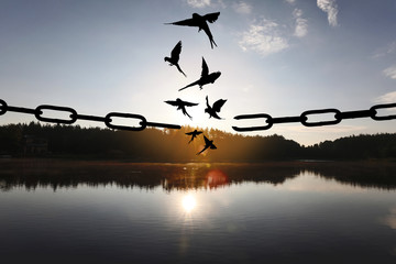 Poster Bird Freedom concept. Silhouettes of broken chain and birds flying outdoors at sunset