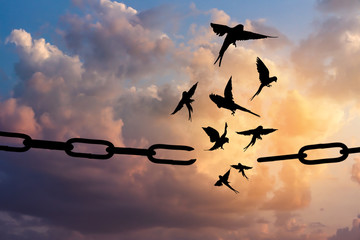 Freedom concept. Silhouettes of broken chain and birds flying in blue sky