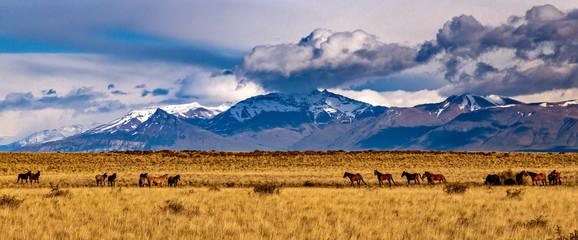 Photo sur Plexiglas Bleu nuit Torres del Paine Mountains, after sunrise.