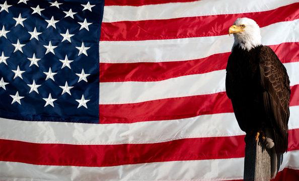 american flag and eagle