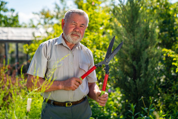 an elderly man with scissors for cutting bushes shear boxwood in shape of ball.