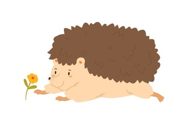 Funny hedgehog crawling to flower vector flat illustration. Cute forest animal having fun admiring plant isolated on white background. Colorful cartoon character lying having positive emotion