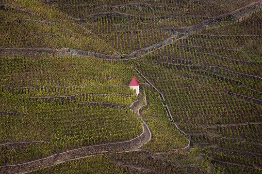 Vineyards in Ampuis, Cote Rotie, northen rhone valley