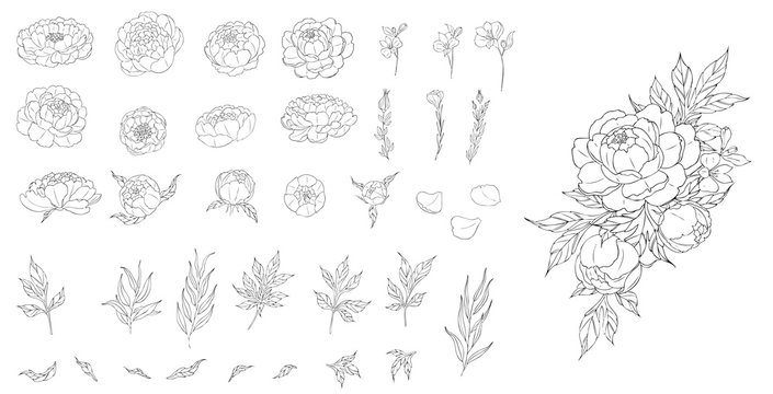 Big set of peony flowers and leaves for making tattoo compositions. Black linear illustration isolated on a white background.