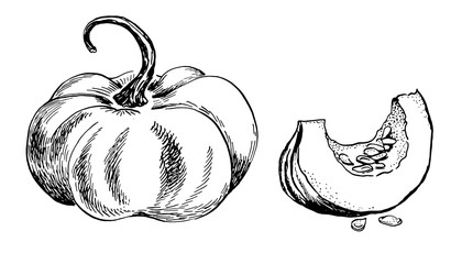 pumpkin and a section vector freehand linear outline ink hand drawn picture sketchy Fotobehang