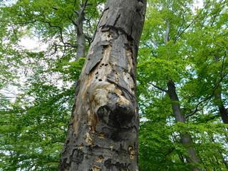 Fototapeta chore drzewo obraz