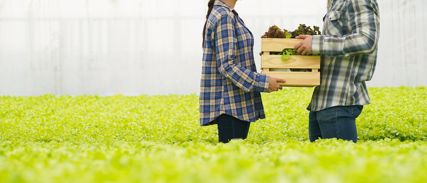 Farmer delivery vegetable in hydroponic farm for food supply chain business