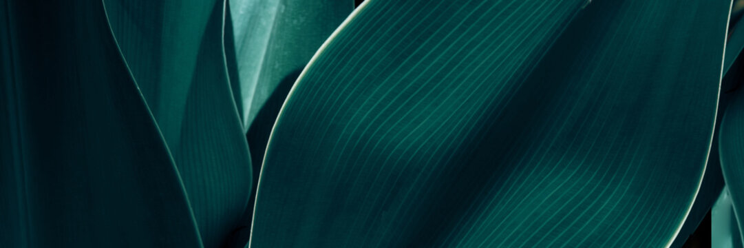 Green tropical plant close-up. Abstract natural floral background Selective focus, macro. Flowing lines of leaves Banner