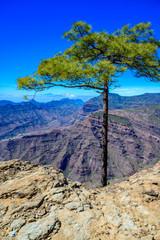 Hiking in Mountain Scenery of Gran Canaria Island - Mountain Teide of Tenerife Island  in the background - beautiful landscape scenery - travel destination in Spain