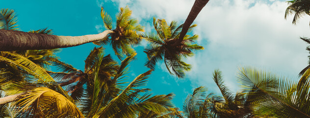 palm tree on the beach summer cover banner concept background.