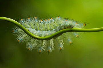 Tuinposter Macrofotografie caterpillar on a green leaf
