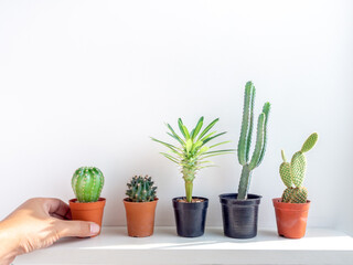 Green cactus in concrete pots on white shelf.